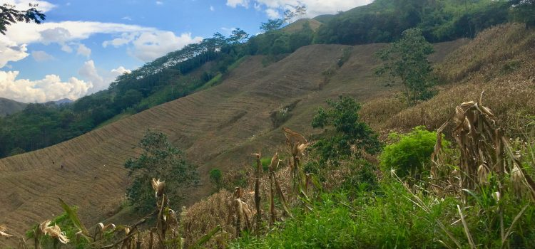 From the Uplands of Mindanao: Healing a Fragmented Land Through an Integral Ecological Approach